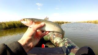 Ловля пеленгаса осенью на кружки.Рыбалка.Fishing(Видео о том как ловить пеленгаса на кружки для ловли щуки осенью. Паблик ВК :http://vk.com/manfishing Сайт