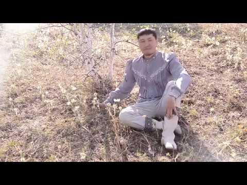 Кылаан Кындыл - Ньургуһуннар