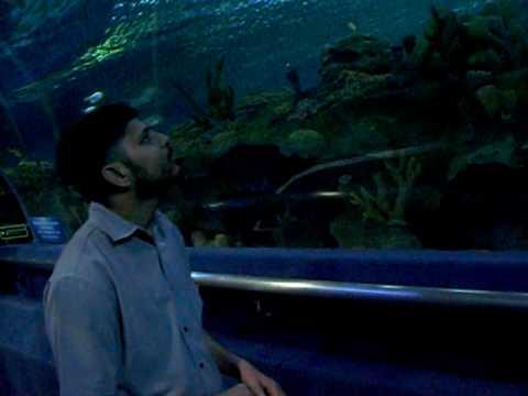 aqua suria underwater aquarium kualalampur suria arif summer