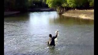 Catch Barramundi Using A Round Net / Men...