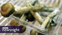hqdefault - Mushrooms Drug And Depression