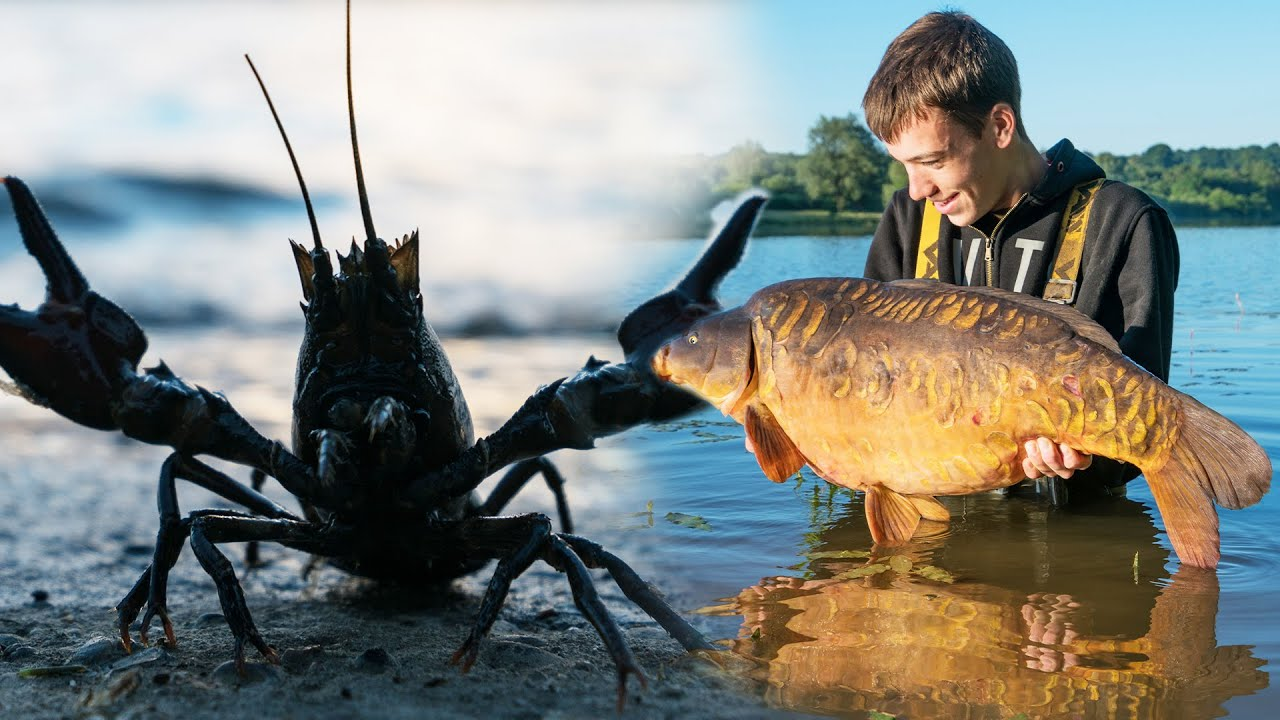 How To Avoid Crayfish And Catch More Carp - Carp Fishing Tips