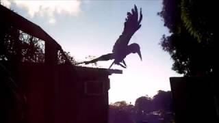 Random Travel Clips & BIRD ATTACK!