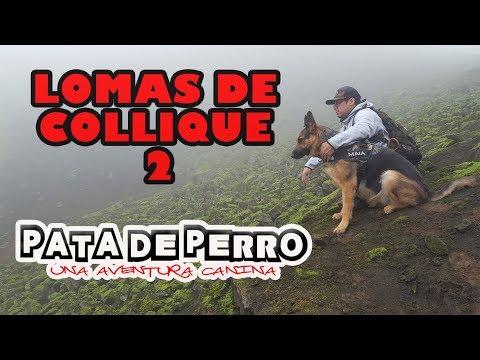 LOMAS DE COLLIQUE 2- PATA DE PERRO una aventura canina