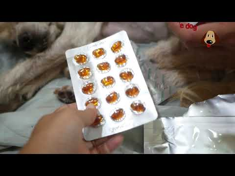 รีวิวอาหารเสริมสุนัขและแมว บำรุงข้อกระดูกว่ากินง่ายขนาดไหน l love dog