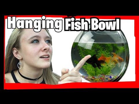 HANGING FISH BOWL!! PET FOLLOW UP!!