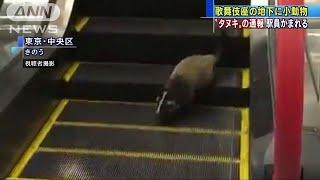 歌舞伎座地下に小動物出現 捕獲の駅員かまれる(19/05/25)
