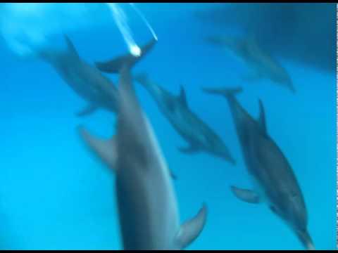 Oceanic Society Bahamas Dolphin Field Study (August, 2010)
