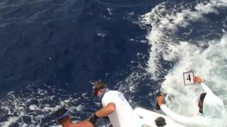 2017 Bermuda Billfish Blast | Team Triple Play | White Marlin