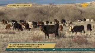 В селе Еркиндык Карагандинской области введен режим ЧС
