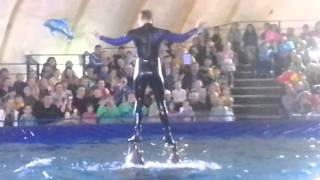 Как поют дельфины/ дельфинарий/Абакан