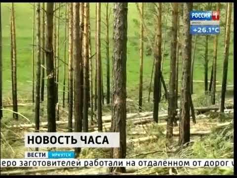 В Казачинско Ленском районе задержали подозреваемых в рубке леса на 14 миллионов рублей