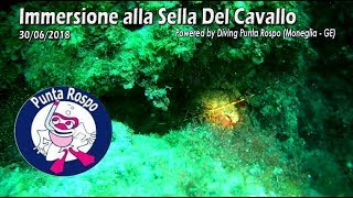 Immersione alla Sella del Cavallo - Diving Punta Rospo - Moneglia 15/07/2018
