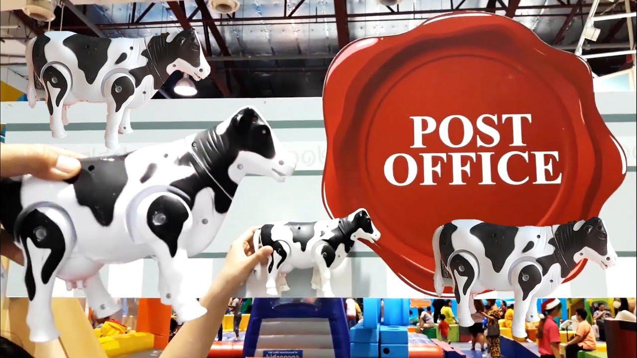 วัวกับควาย เที่ยวไปรษณีย์และวิ่งแข่งกัน buffalo and cow with post office