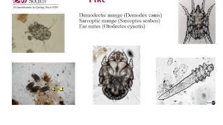 The Anti-Cruelty Society: Ectoparasites
