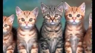 Piosenka dla dzieci - Aaa kotki dwa