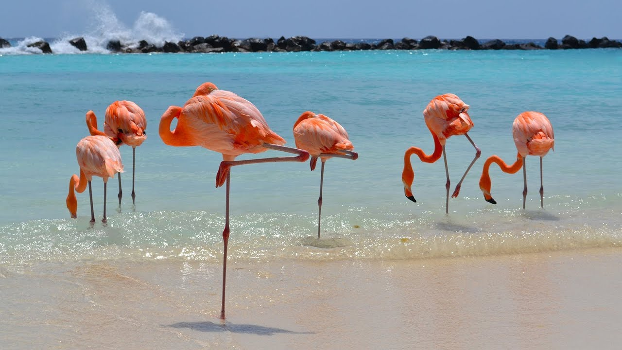This resort is really into flamingos and now we're really into this resort