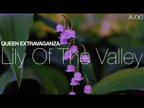 Marc Martel + Queen Extravaganza - Lily of the Valley (from Gloucester 2015 Live Bootleg)