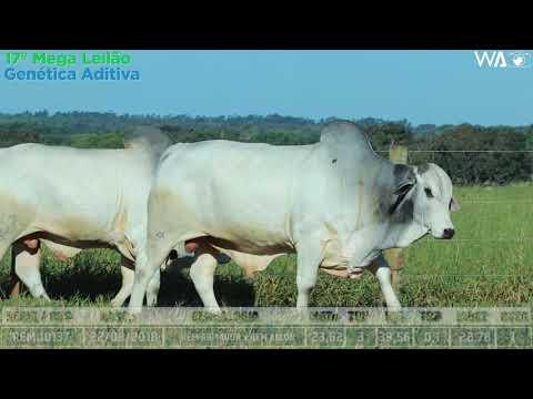 LOTE 34 - DUPLO - REM 10137, REMP 526 - 17º Mega Leilão Genética Aditiva 2020