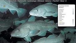 Suomen kalat ja kalastus CD-Facta (2001)