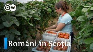 Sezonieri în Scoţia: muncă multă, leafă mică şi un viitor incert
