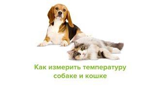 Как измерить температуру собаке и кошке. Ветеринарная клиника Био-Вет.