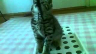 Котята. Приколы. Мега-милое видео про котенка.