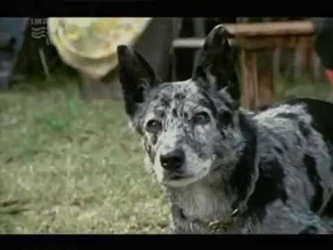 Snobs - S01E14 (2003) - Nine Network (Australia)