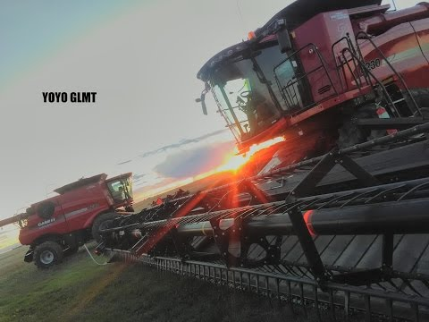 (GOPRO) Harvest time  2016 in farm Alberta, CANADA. Two CASE IH 8230, IH QUADTRAC, VERSATILE  2375.