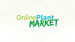 Online Plant Market