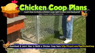 Mobile Chicken Coop - Small Chicken Coops