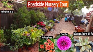 Roadside Nursery Visit, Plant name \u0026 Price 🌹🌴🌵🌳