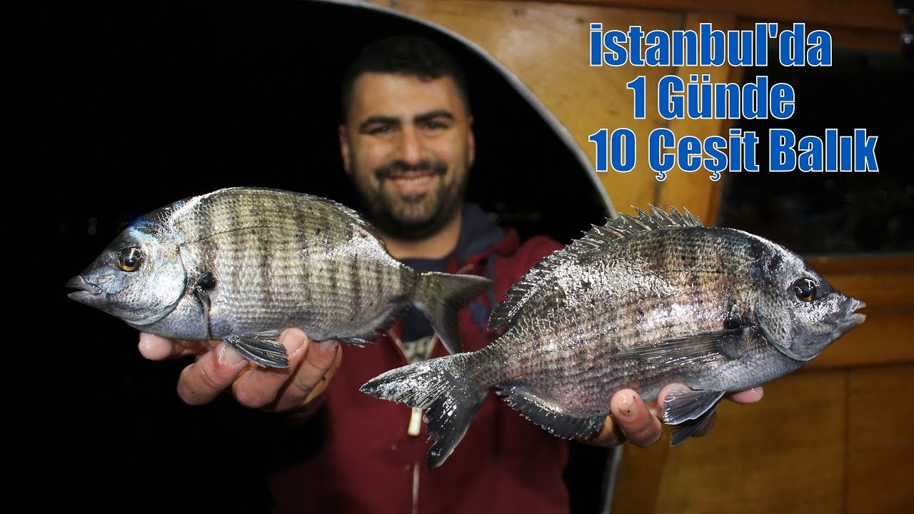 İstanbul'da 1 Günde 10 Çeşit Balık Yakaladık !!