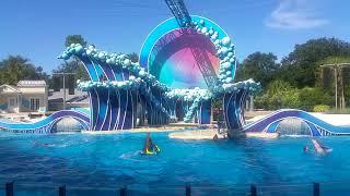 SeaWorld Dolphin show 2018