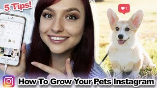 How to Grow a Pet Instagram Account | 5 Tips!