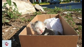 Rescue of two baby kittens left to die of hunger on the street