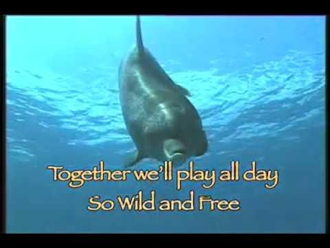Dolphin Song with Lyrics
