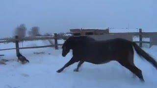 Лошадь vs собака / Не стоит отбирать у лошади морковку :D