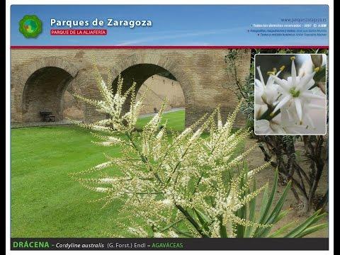 Parque de la Aljafería. Especies ornamentales.