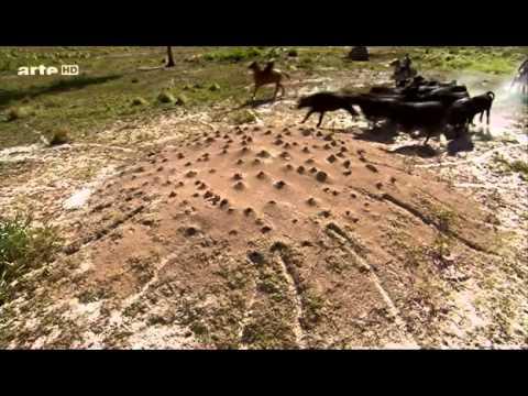 Ameisen Doku: Die heimliche Weltmacht