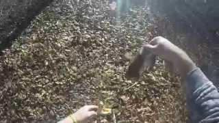 DIY deer antler slingshot