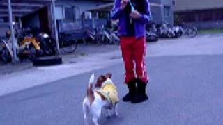 http://uran-dog.cocolog-nifty.com/blog/ 犬用シャボン玉ではじめての...