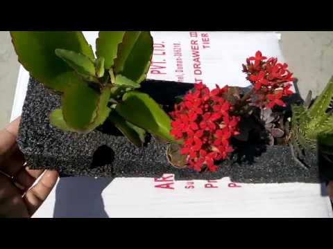 310 -  How to use of waste packing material as Beautiful Planter (Hindi /Urdu) 23/2 /17