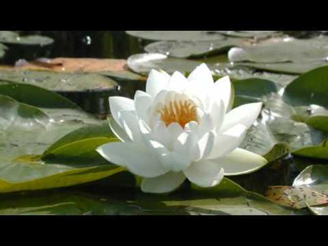 """""""Sogno""""  -  ( Andrea Bocelli )"""