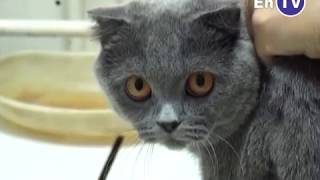 Вакцинация домашних животных против бешенства