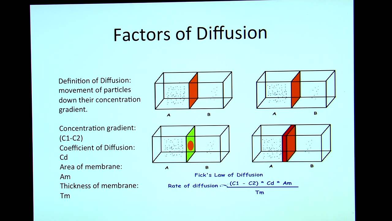 Factors of Diffusion - YouTube