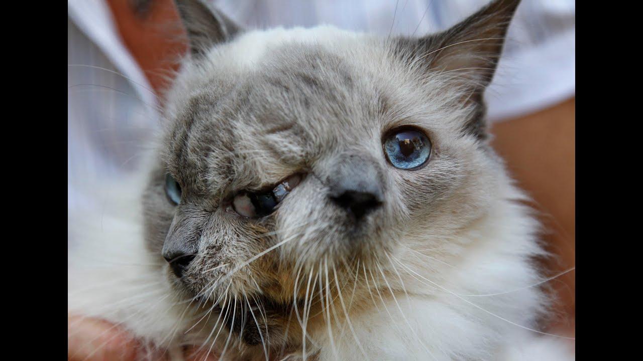 Кот фрэнком луи