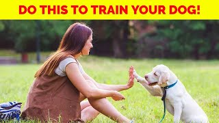 Do This To Train Your Dog Easily