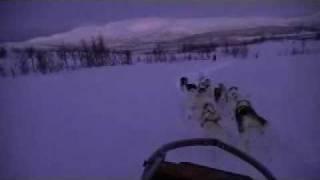 ノルウェーのトロムソでの犬ぞり体験 絶景とハスキー達に感謝です。よか...