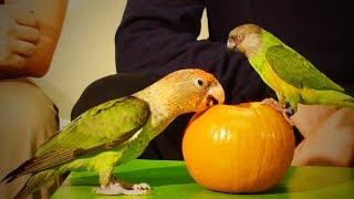 Funny Parrots 🐦 😂  Cute and Awesome Parrots (Full) [Epic Life]